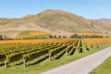 marlborough: aerial view of New Zealand vineyards in autumn colours