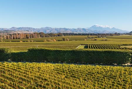 marlborough: aerial view of autumn vineyard in Awatere valley, New Zealand