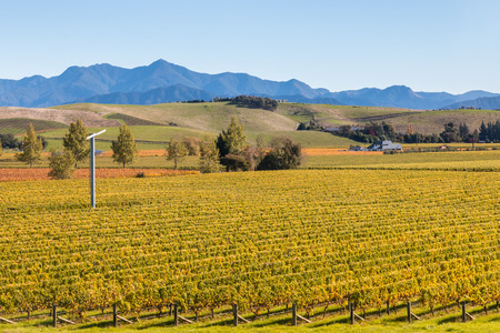 marlborough: aerial view of autumn vineyards in New Zealand at harvest time Stock Photo