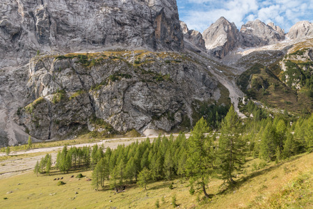 larch trees growing in Val Ombretta near Marmolada mountain in Dolomites Imagens