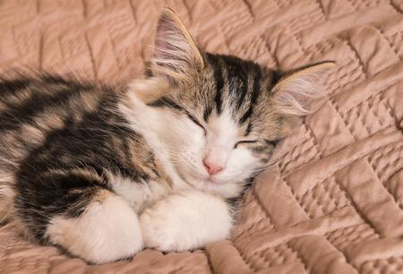 closeup of tabby cat sleeping on pale brown duvet