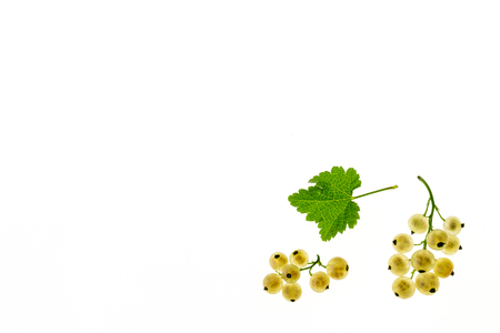 closeup of ripe white currant berries with leaf on white background with copy space