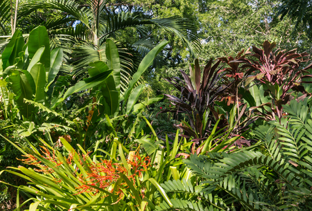 collection of plants growing in tropical rainforest in City Botanic Gardens in Brisbane, Australia Stock Photo