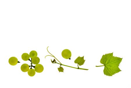 white Riesling grapes and leaf isolated on white background