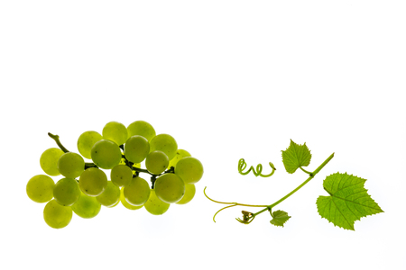 bunch of white seedless grapes with leaves on white background Stock Photo