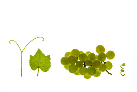 closeup of white riesling grapes with leaf and stem on white background