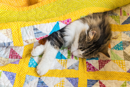 longhair tabby cat sleeping in colourful quilt cover