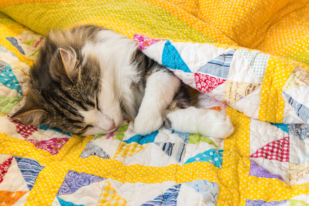 closeup of tabby cat resting in colourful quilt cover Imagens