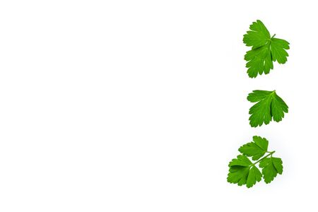 chopped fresh parsley leaves on white background with copy space on left