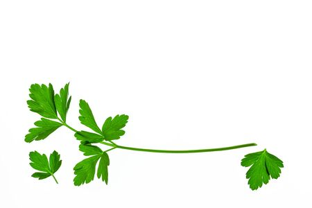 closeup of fresh organic parsley leaves isolated on white background