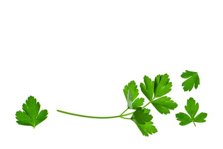 Italian parsley leaves on white background with copy space above