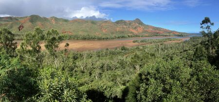 native forest growing on volcanic soil on western coast of New Caledonia