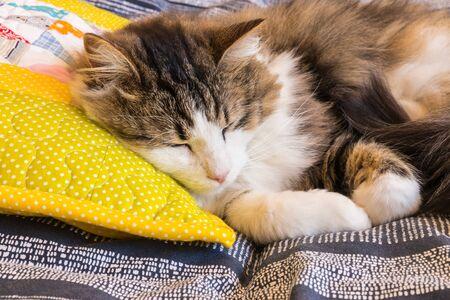 closeup of tabby cat sleeping on yellow pillow