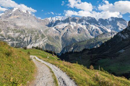 hiking track across alpine meadow in Bernese Alps, Switzerland