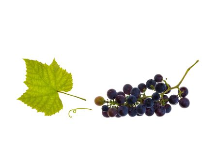 bunch of ripe pinot noir grapes on white background with copy space above
