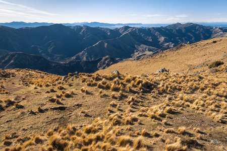 tussock growing on slopes above Awatere Valley, Marlborough, South Island, New Zealand 스톡 콘텐츠