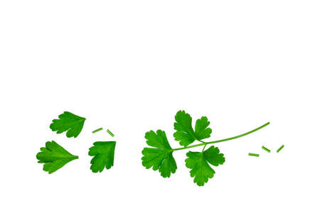 closeup of chopped Italian parsley leaves on white background with copy space 스톡 콘텐츠