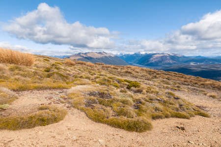 alpine vegetation growing on arid slopes in Nelson Lakes National Park, South Island, New Zealand 스톡 콘텐츠