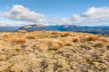 subalpine vegetation growing on hill in Nelson Lakes National Park, South Island, New Zealand 스톡 콘텐츠