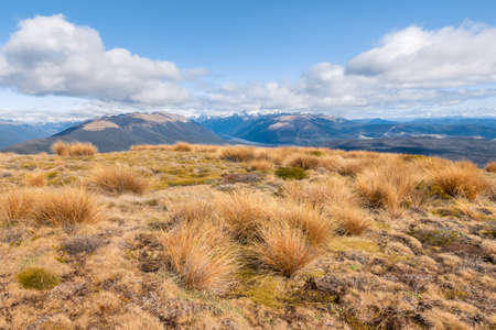 grassy hill in Nelson Lakes National Park with blue skies and copy space, New Zealand