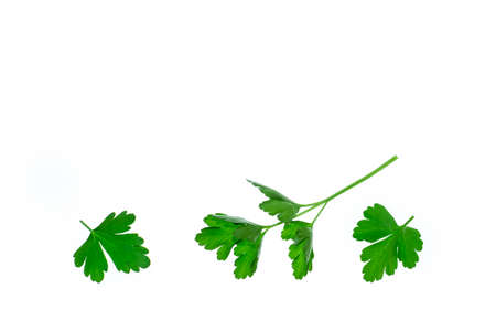 chopped flat-leaved parsley leaves isolated on white background with copy space