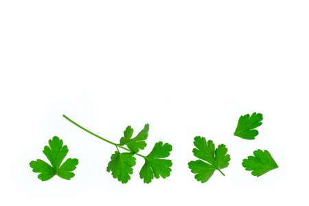 closeup of chopped Italian parsley leaves on white background with copy space above
