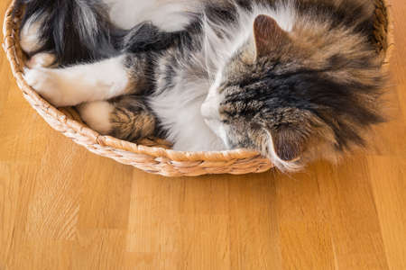 closeup of a tabby cat sleeping curled up in a wicker basket with copy space