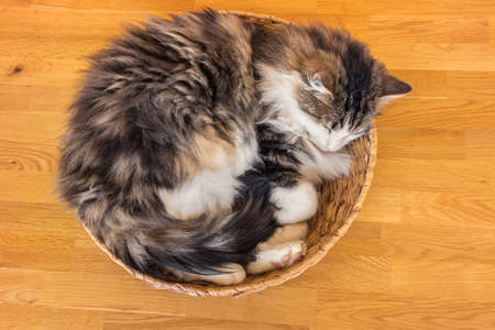 tabby cat lying curled up in a wicker basket on wooden table