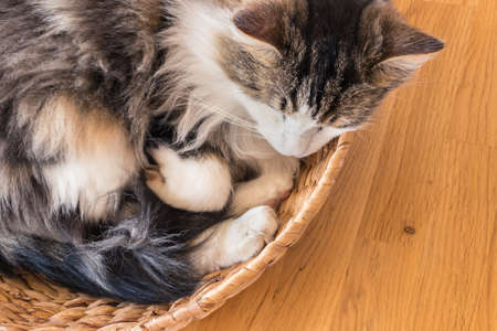 closeup of a tabby cat sleeping in a wicker basket with copy space on right