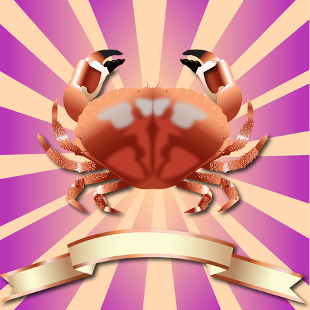 Crab realistic Retro Rays background Sea Food and Copper ribbon 일러스트