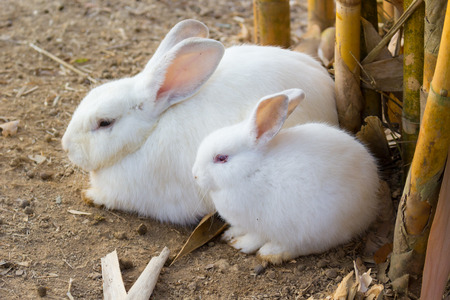 Cute White rabbit relax in the morning photo