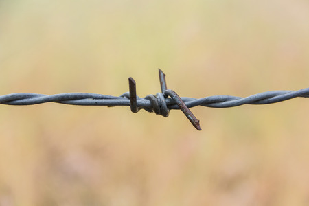 Close up barbed wire, barb wire for fence,barbed wire in grassland Stock Photo