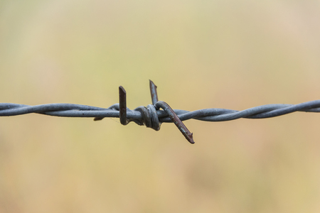 invade: Close up barbed wire, barb wire for fence,barbed wire in grassland Stock Photo