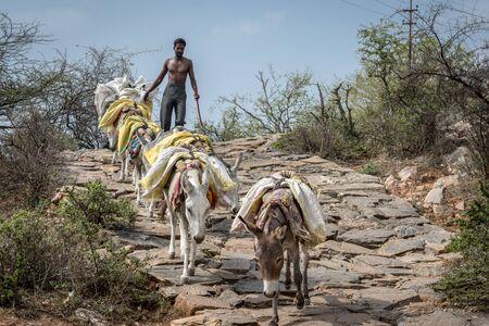 donkey walking downhill with indian herdsman in Pushkar Rajasthan India