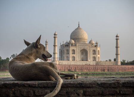 dog relaxing with lovely view on huge famous temple in Agra 写真素材