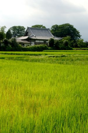 Japanese Farmhouse with Rice Field Stock Photo
