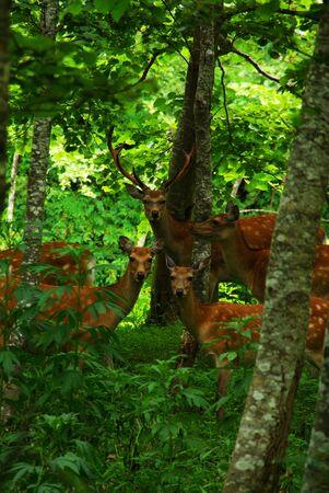 森の中に鹿の 写真素材 - 1482931