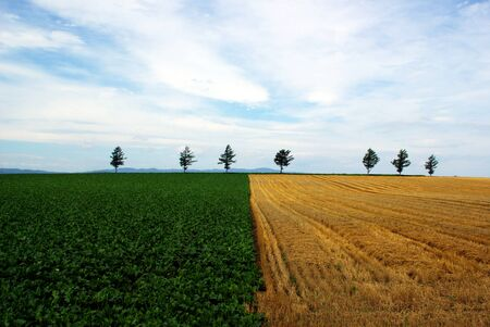 Manicured Farmland Stock Photo