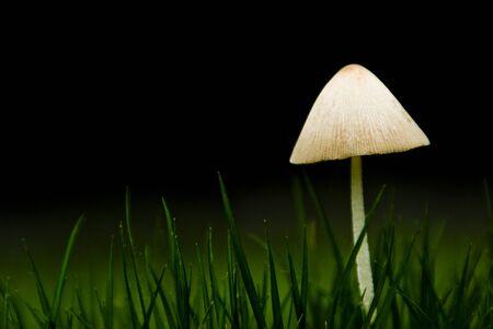 小さな白いキノコと草