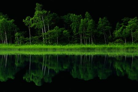Tree line Reflected in Water