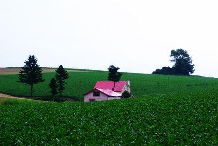 farm house: Little Pink Farm House