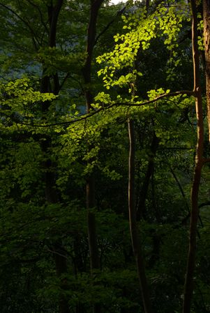 gentile: Gentile Forest Light Stock Photo