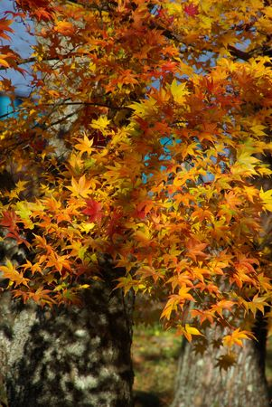Perfect Expression of Autumn Stock Photo - 2114547