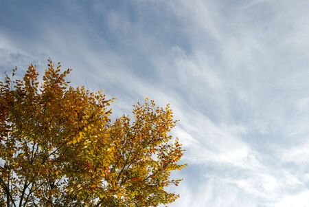 yellow and orange tree against a blue autumn sky with interesting clouds photo