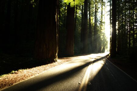 Avenue of the Giants, Northern California