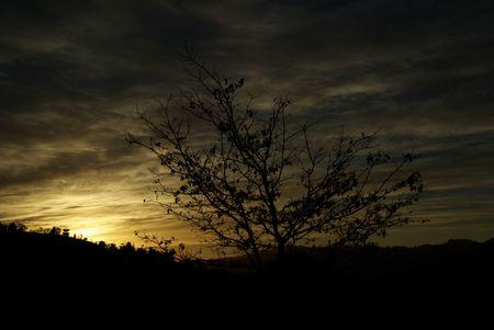 horrizon: High Altitude tree silhouette