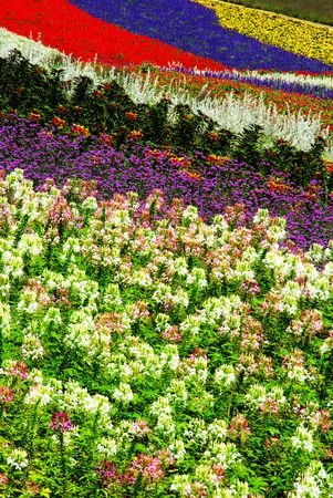 A Flower Farm in the Furano district of Hokkaido, Japan. Stock Photo