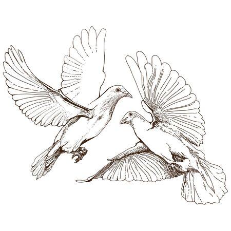 digital inking flying doves