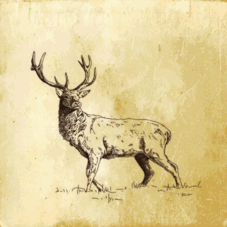 vector inking deer