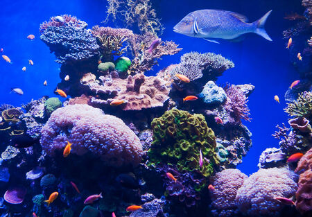 Exotic fishes and colorfull corals photo
